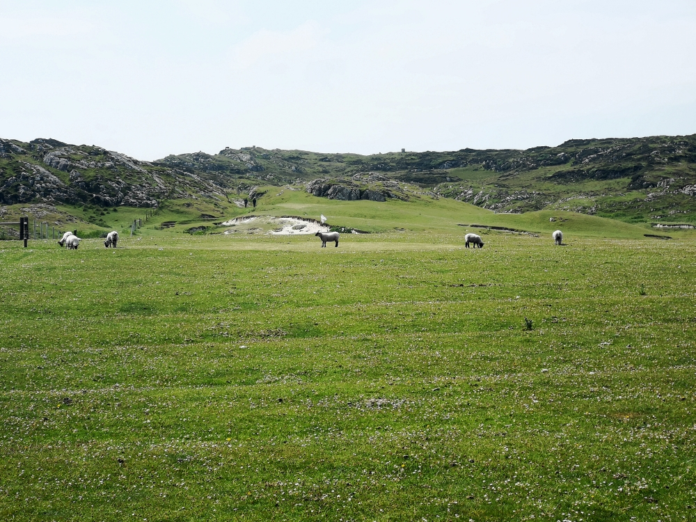 Isle of Iona Golf Course - das Grün wird gemäht