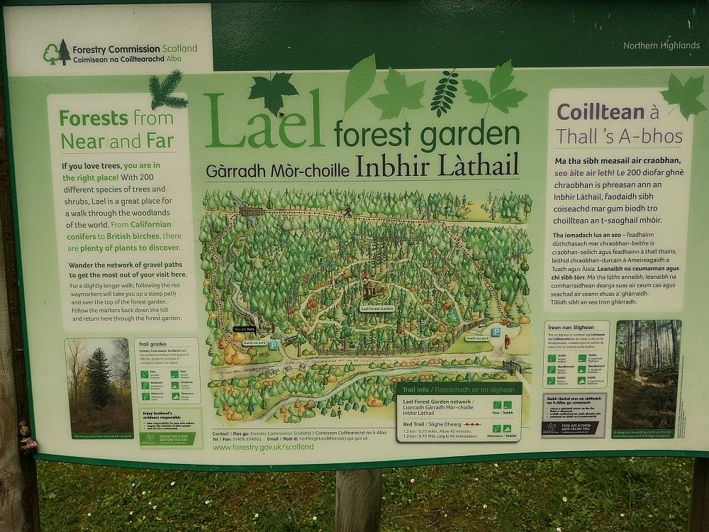 Leal Forest Plakat